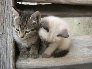 Ako sa starať o mačku?