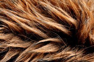 Vlasy v spreji