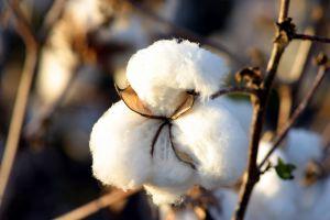 Bavlnené obliečky